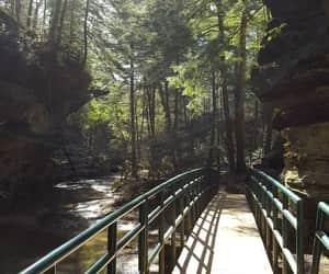 bridge, green, and hiking image