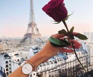 paris, rose, and flowers image