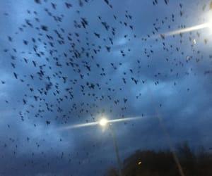 aesthetics, birds, and lights image