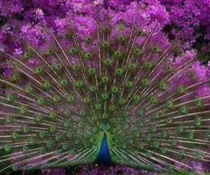 beautiful, nature, and splendor image