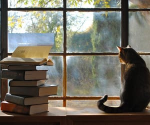 book, cat, and window image
