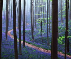 blue, enchanted forest, and flowers image