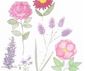 flowers, spring, and watercolor image