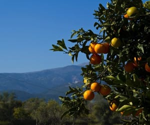 orange and summer image