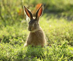 bunny, green, and summer image