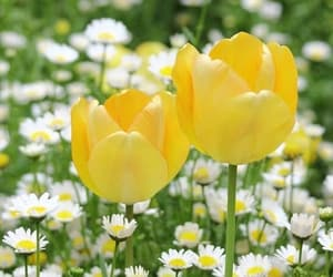 flowers, tulips, and daisy image