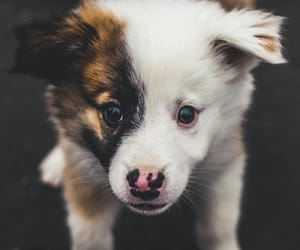 animal and landscape image