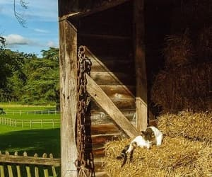 animal, cats, and countryside image