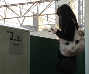 cat, cute, and japanese image