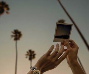 la and palms image