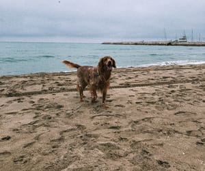beach, dog, and dogs image