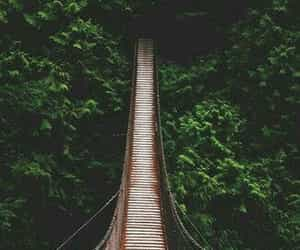 wallpaper, bridge, and nature image