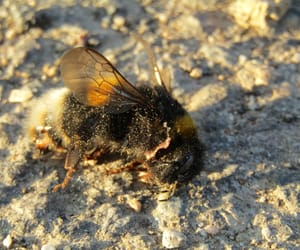 animal, bee, and nature image