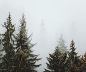 forest, nature, and wander image