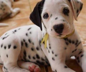 dog, animal, and lovely image
