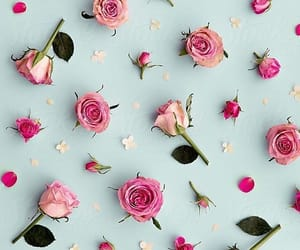 background, cute, and flowers image