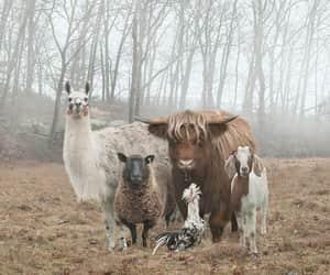 animal, llama, and goat image
