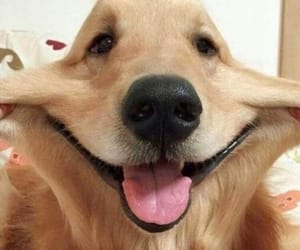 dog, cute, and pupy image