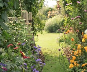 garden and flowers image