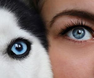blue eyes, girl, and puppy image