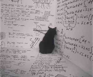 cat, math, and animal image