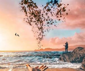 beach, birds, and heart image