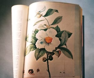 flowers, vintage, and book image