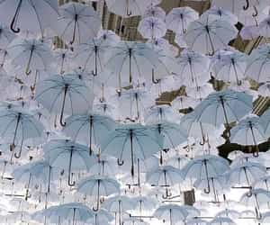umbrella image