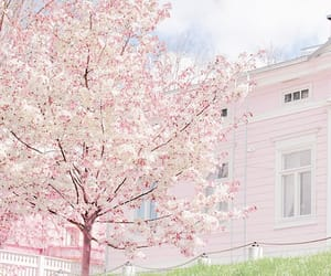 pink, cherry blossom, and flowers image