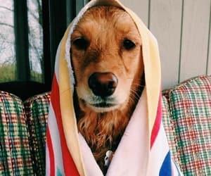 beach, love, and dog image