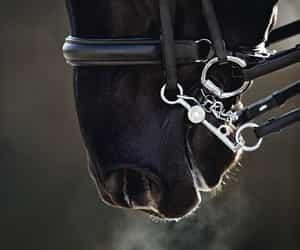 animals, equestrian, and farm image