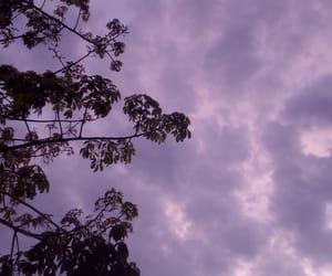 arbol, atardecer, and hojas image