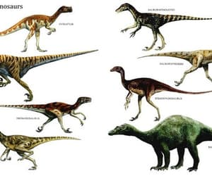 animals, dinosaurs, and raptors image