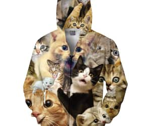 cats, kittens, and kitty image