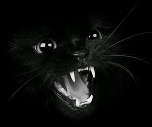 black background, black cat, and cute cat image