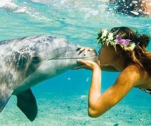animal, animals, and love image