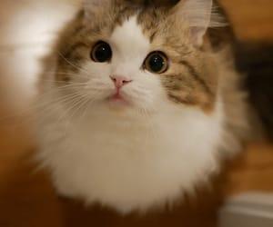 cat, animal, and gattino image