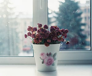 flowers, floral, and nature image