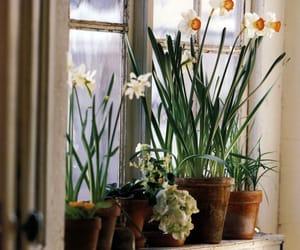 daffodils, flowers, and houseplants image