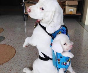 baby, dogs, and eyes image