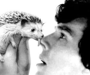 benedict cumberbatch, sherlock, and hedgehog image
