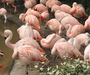 animals, flamingos, and fresh image