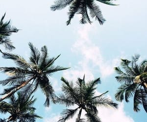 dreamy, palmtrees, and travel image