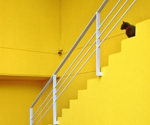 cat, stairs, and minimalism image