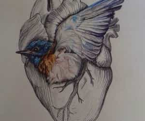 bluebird and heart image