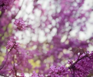 background, spring, and flower image