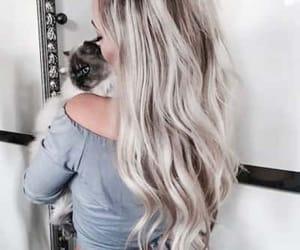 cat, grey, and hair image