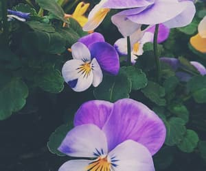 beautiful, beauty, and flower image