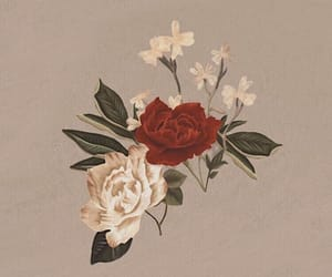 album, background, and flowers image