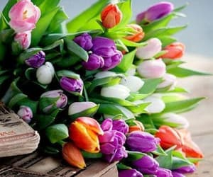 article, crocus, and flowers image